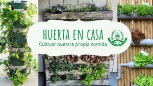 Lee más sobre el artículo Cultivar nuestra propia comida